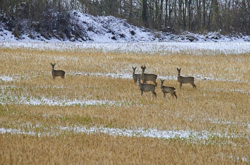 Familienwanderung durch den Winterwald