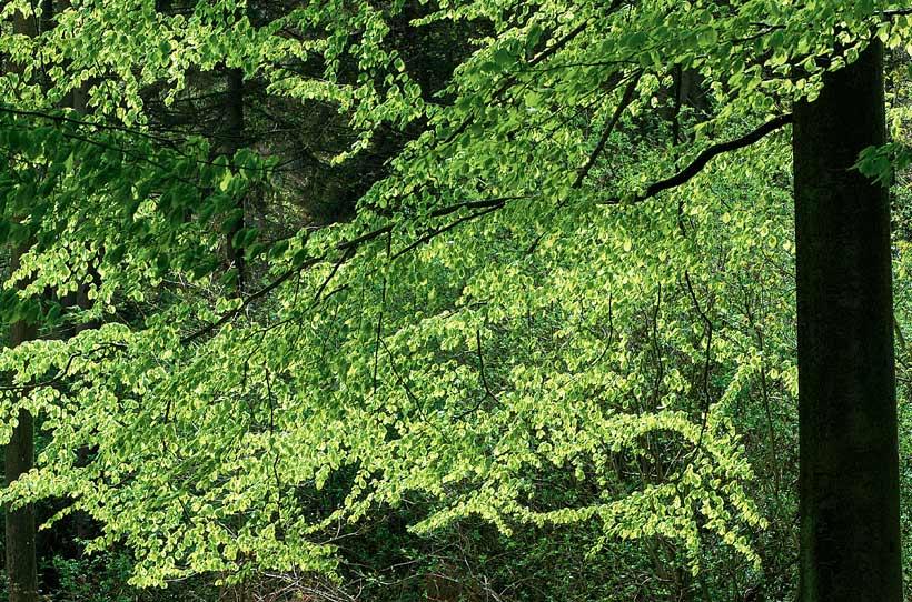 Klimaschützer Wald