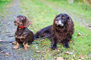 Hundespielplatz im ErlebnisWald Trappenkamp