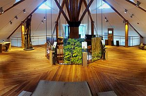 Ausstellung »Faszination Wald»